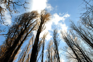 looking-up-at-trees-1396115-639x427
